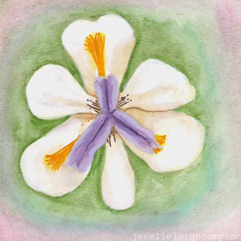 African Iris (Flower, Blossom) on Gouache on Paper by New Orleans Jackson Square Artist, Jenelle Leigh Campion MFA @jenelleleighc