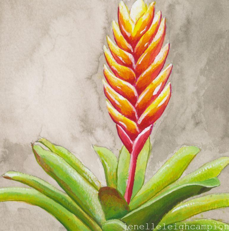 Bromeliad (Flower, Blossom) on Gouache on Paper by New Orleans Jackson Square Artist, Jenelle Leigh Campion MFA @jenelleleighc