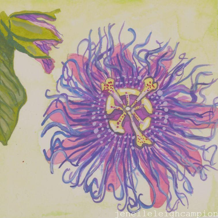 Passionflower (Flower, Blossom) on Gouache on Paper by New Orleans Jackson Square Artist, Jenelle Leigh Campion MFA @jenelleleighc