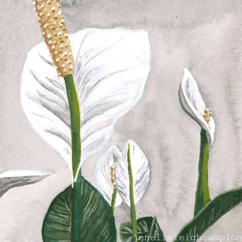 Peace Lily (Flower, Blossom) on Gouache on Paper by New Orleans Jackson Square Artist, Jenelle Leigh Campion MFA @jenelleleighc