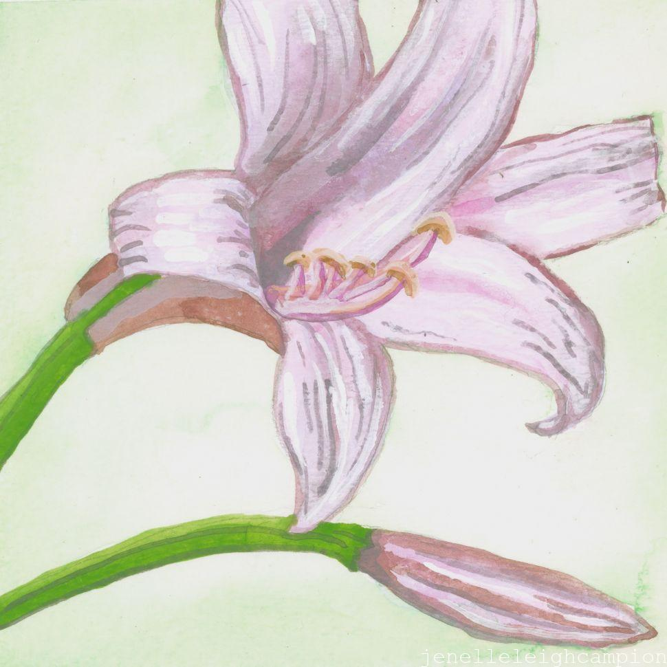 Pink Lily (Flower, Blossom) on Gouache on Paper by New Orleans Jackson Square Artist, Jenelle Leigh Campion MFA @jenelleleighc