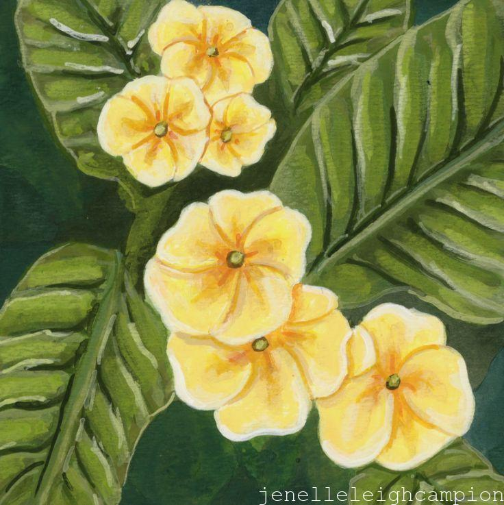 Primrose (Flower, Blossom) on Gouache on Paper by New Orleans Jackson Square Artist, Jenelle Leigh Campion MFA @jenelleleighc
