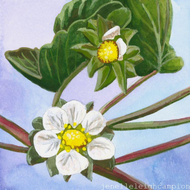 Strawberry (Flower, Blossom) on Gouache on Paper by New Orleans Jackson Square Artist, Jenelle Leigh Campion MFA @jenelleleighc