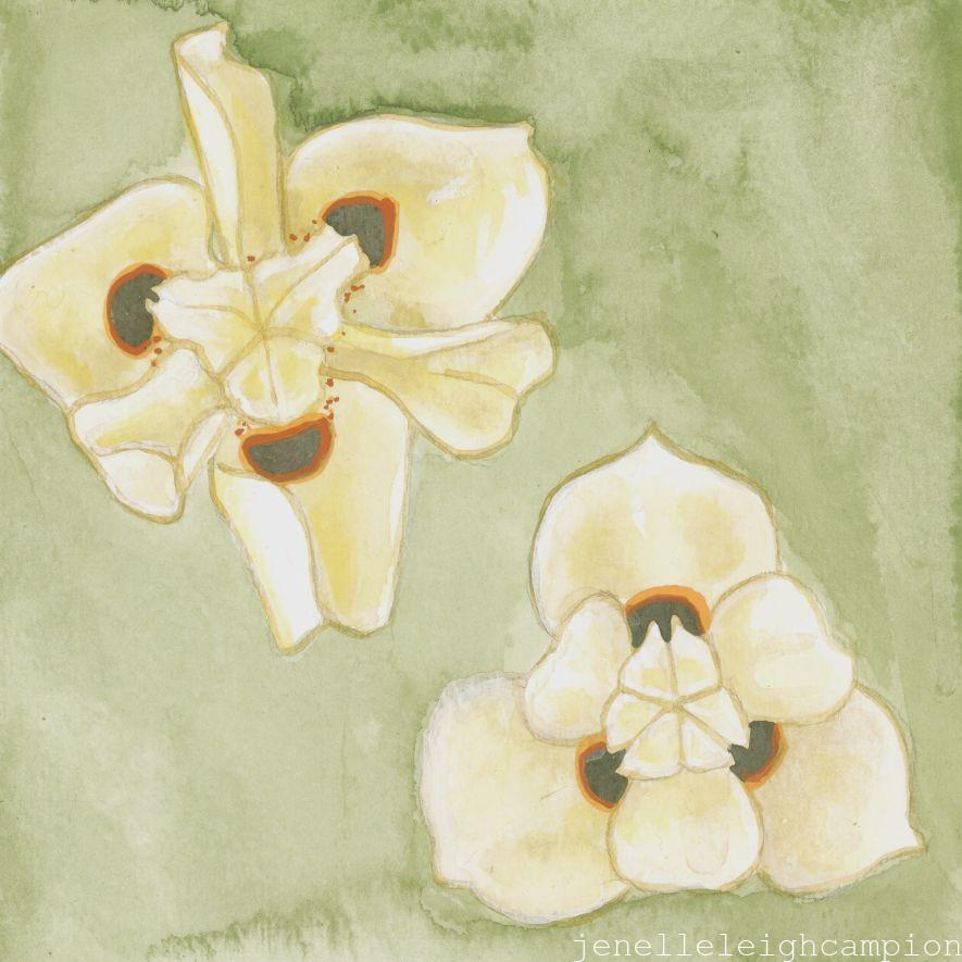 Wild Yellow Iris (Flower, Blossom) on Gouache on Paper by New Orleans Jackson Square Artist, Jenelle Leigh Campion MFA @jenelleleighc